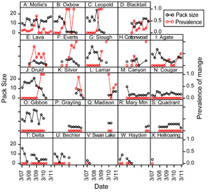 Time series of wolf pack sizes and mange prevalence